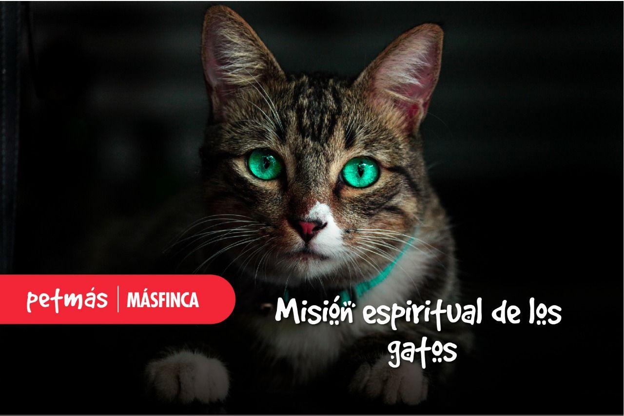 petmas.masfinca.com
